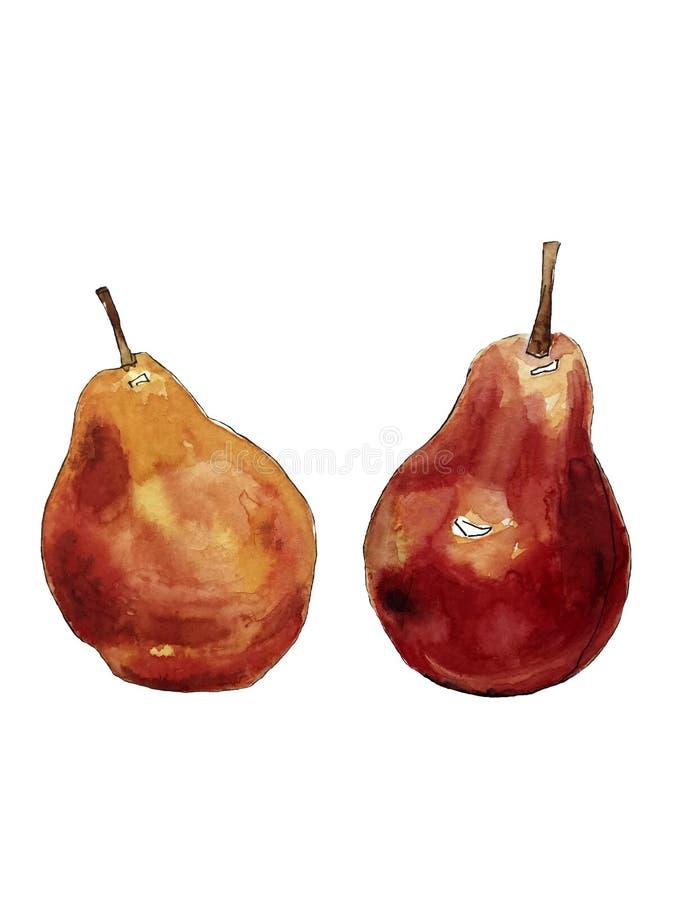 Vattenfärgteckning av två päron royaltyfri foto