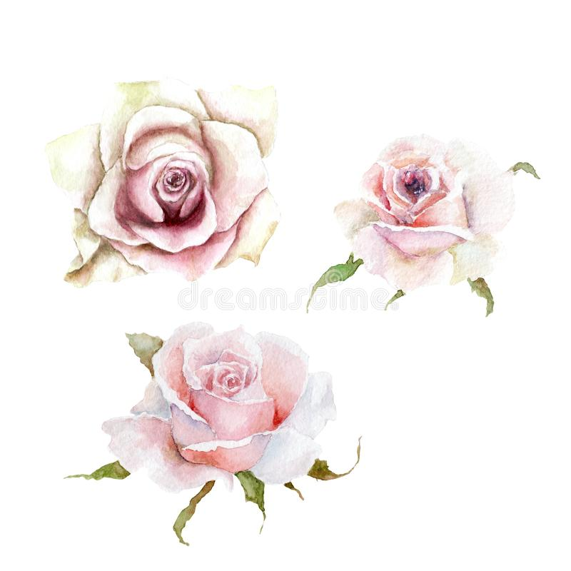 Vattenfärgteckningar tre rosa rosa knoppar, skissar royaltyfri illustrationer