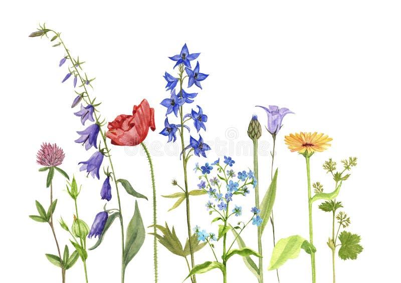 Vattenfärgteckningen blommar och växter vektor illustrationer
