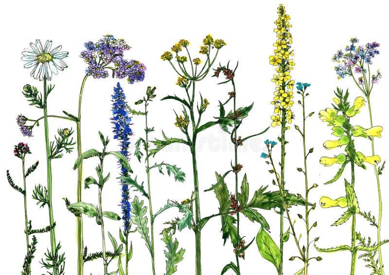 Vattenfärgteckningen blommar och växter stock illustrationer