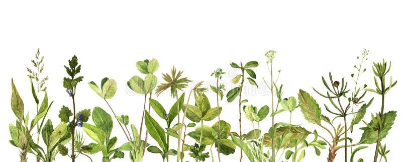 Vattenfärgteckningsgräsplan lämnar och växter stock illustrationer