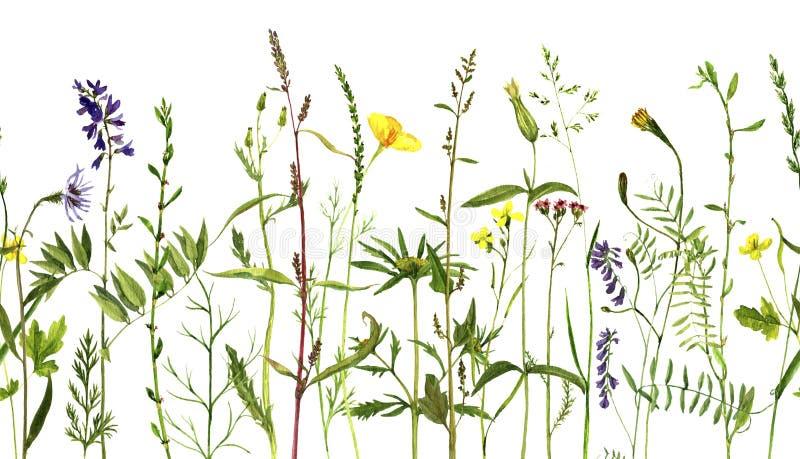 Vattenfärgteckningsväxter vektor illustrationer