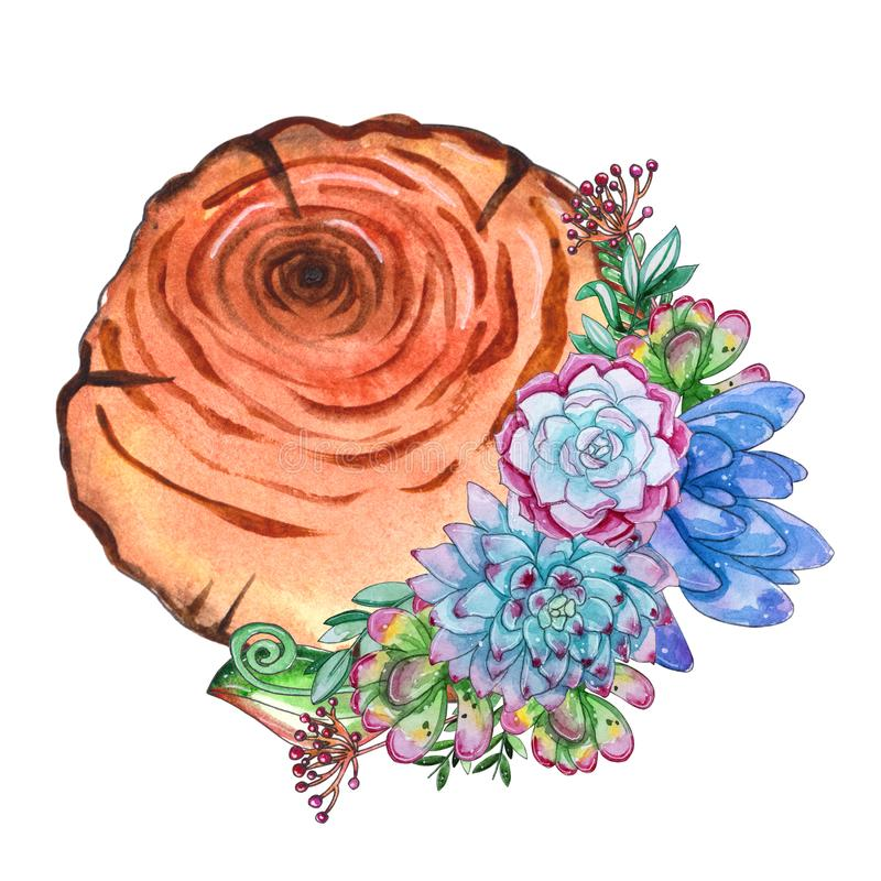 Vattenfärgträdskivor med suckulenta växter royaltyfri illustrationer