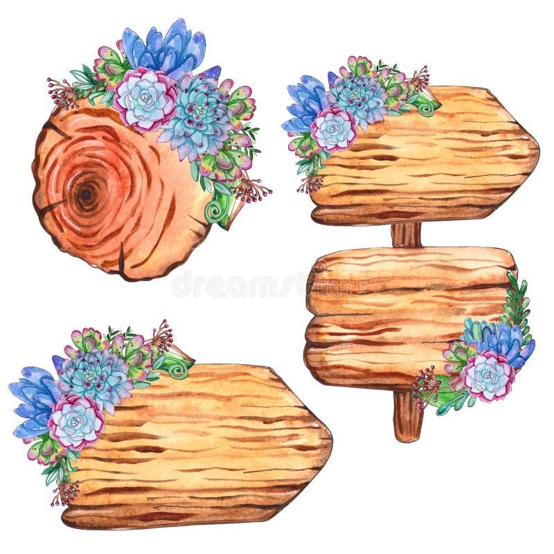 Vattenfärgträdskivor med suckulenta växter vektor illustrationer