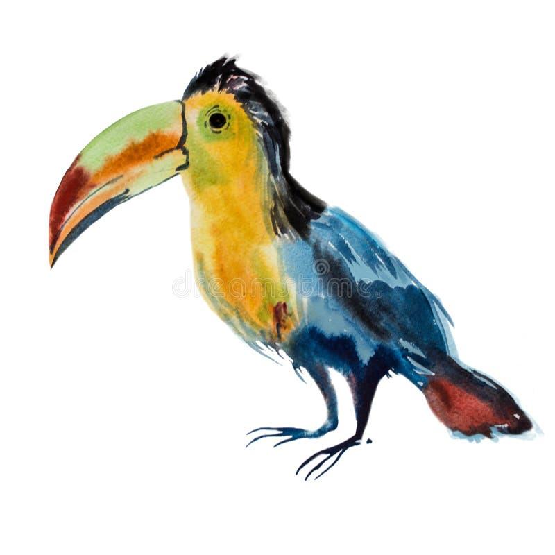 Vattenfärgtukanfågel stock illustrationer