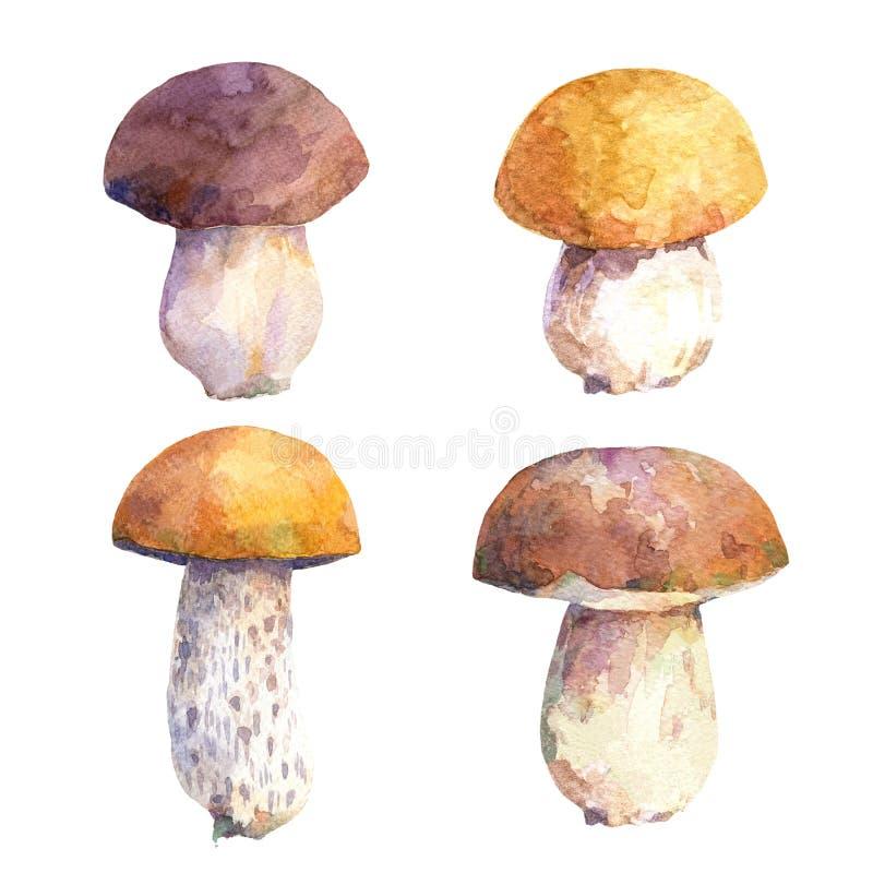 Vattenfärguppsättning av ätliga champinjoner stock illustrationer
