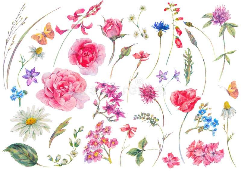 Vattenfärguppsättning av beståndsdelar för blom- sommar för tappning naturliga royaltyfri illustrationer