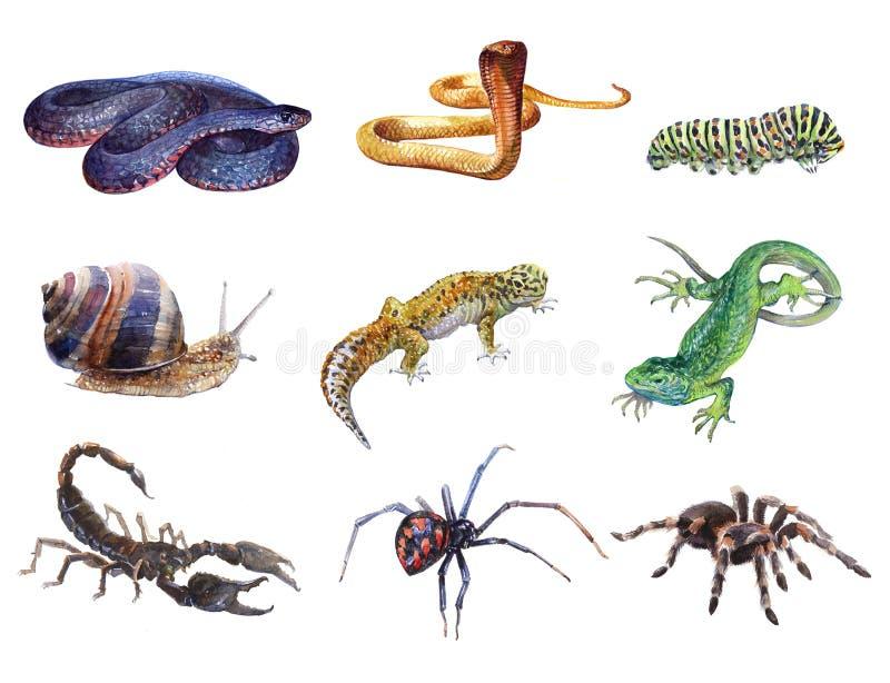 Vattenfärguppsättning av djur tarantel, spindel, larv, ödla, gecko, Skorpion, snigel, isolerad kobraorm stock illustrationer