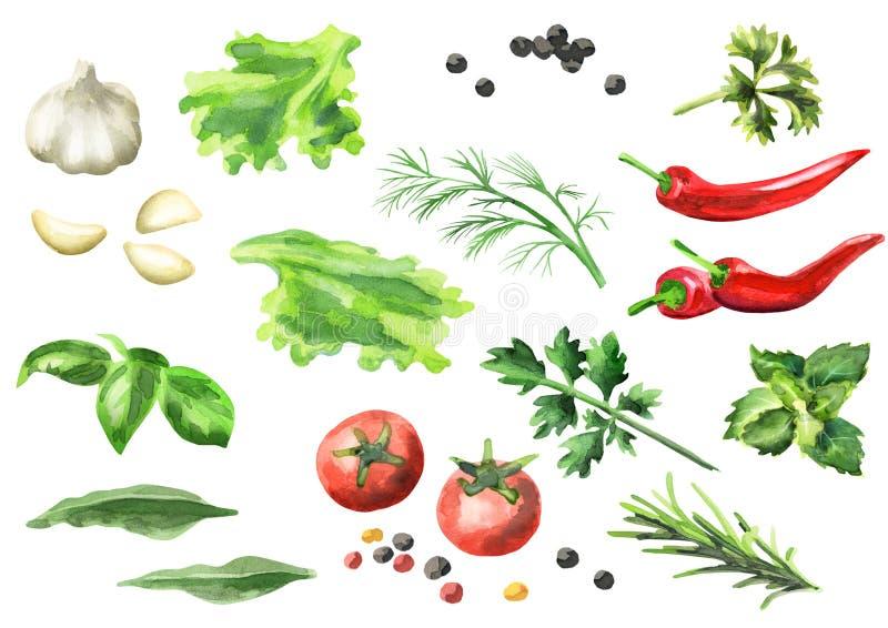 Vattenfärguppsättning av kryddor och örter som isoleras vektor illustrationer