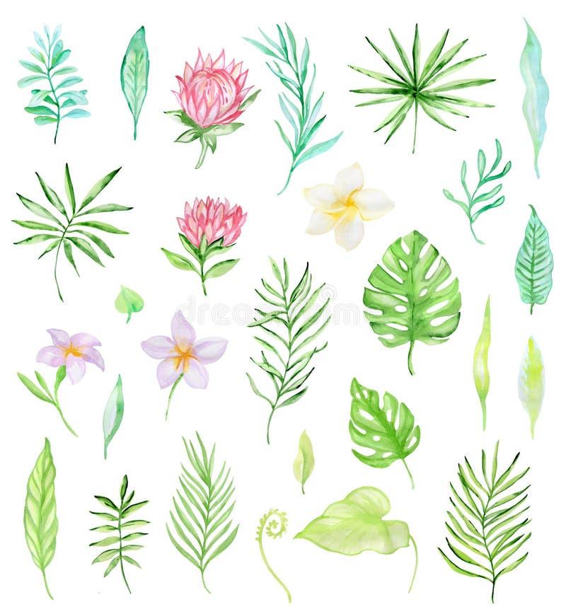 Vattenfärguppsättning av tropiska blommor vektor illustrationer