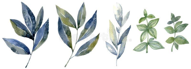 Vattenfärguppsättning med skogbladet Illustration för Washteckning vektor illustrationer