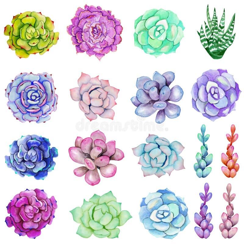 Vattenfärguppsättning med suckulenter royaltyfri illustrationer