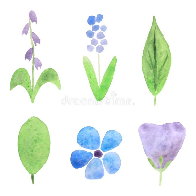 Vattenfärgväxter stock illustrationer