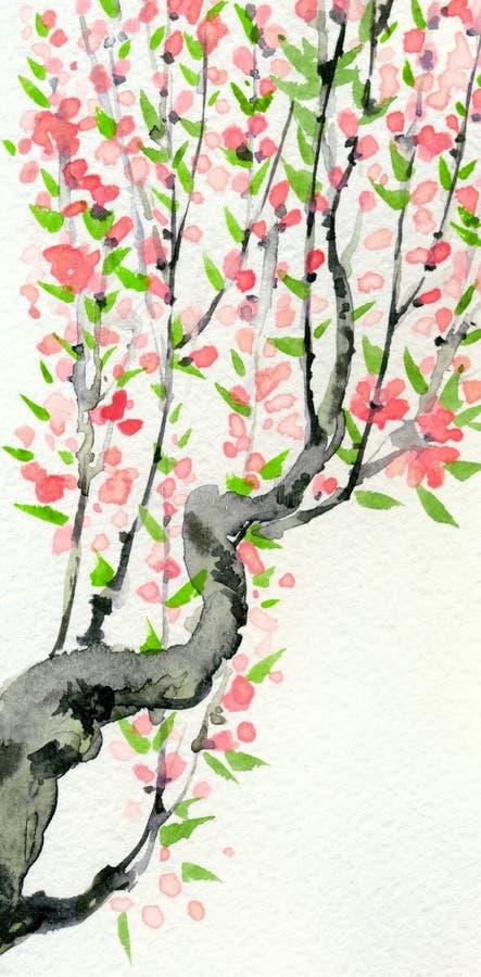 Vattenfärgvårbakgrund Rosa färgen blommar på trädfilialer vektor illustrationer