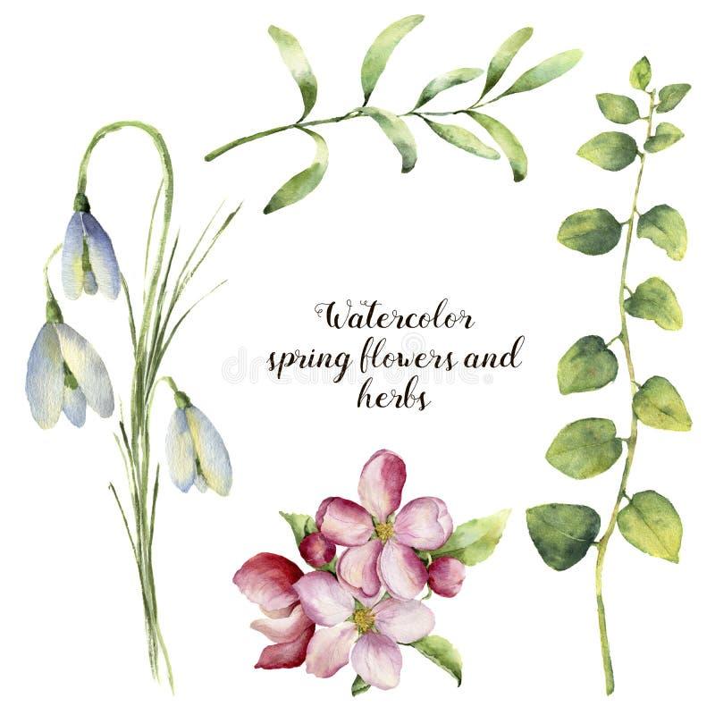 Vattenfärgvårblommor och örter Blom- uppsättning med snödroppar, körsbärsröd blomning, örtfilialer som isoleras på vit royaltyfri illustrationer