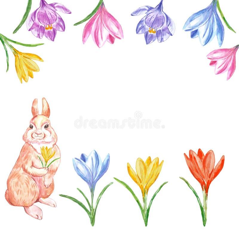 Vattenfärgvårillustration med kanin- och krokusblommor som isoleras på vit bakgrund kort easter stock illustrationer