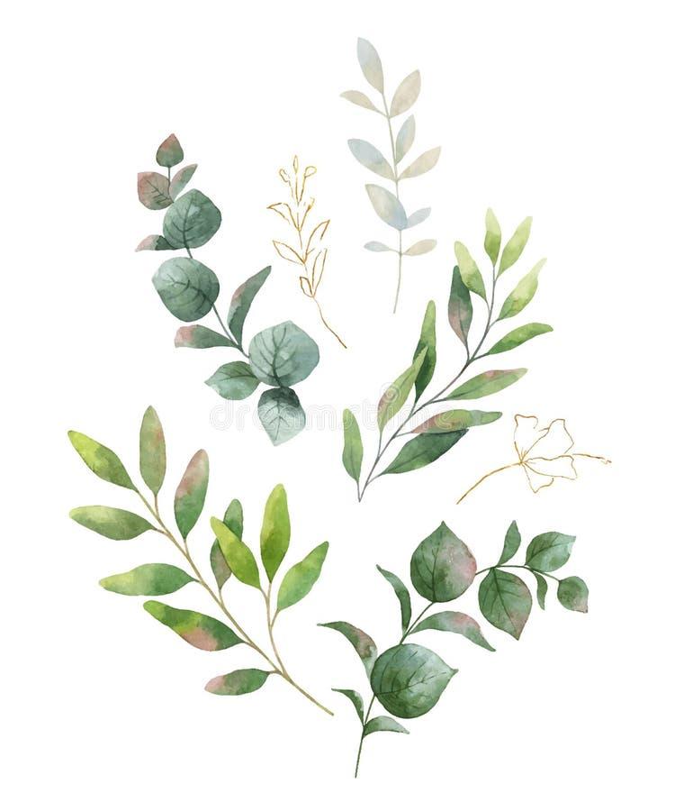 Vattenfärgvektorkrans med gröna eukalyptussidor och blommor stock illustrationer