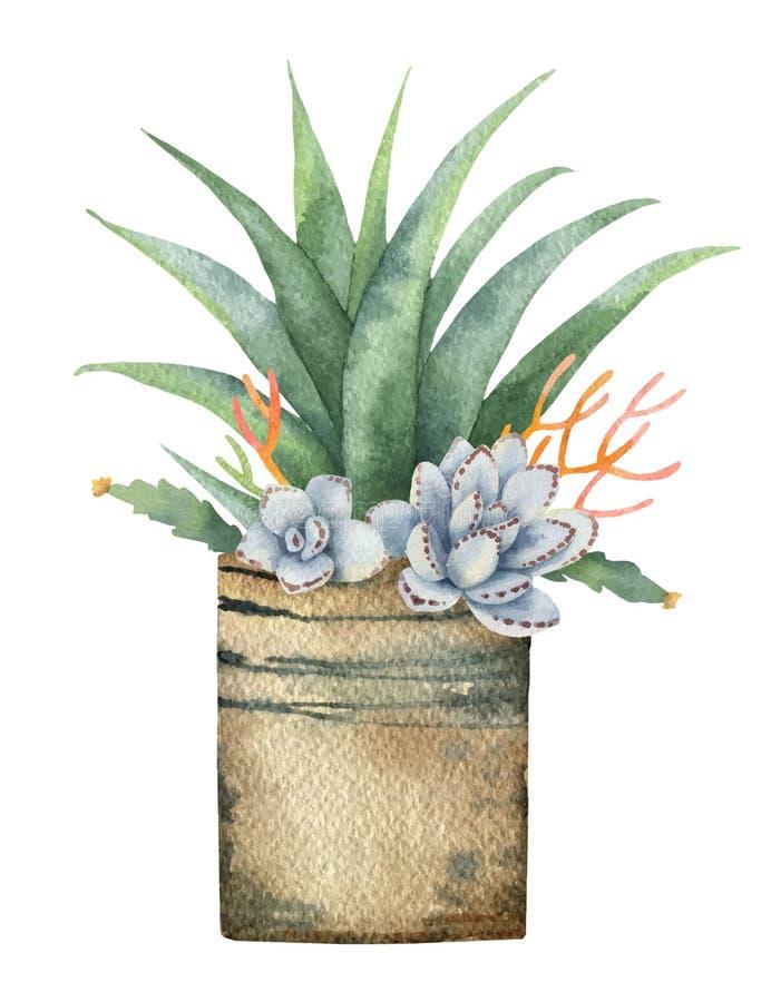 Vattenfärgvektorsammansättning av kakturs och suckulenter i en kruka som isoleras på vit bakgrund royaltyfri illustrationer