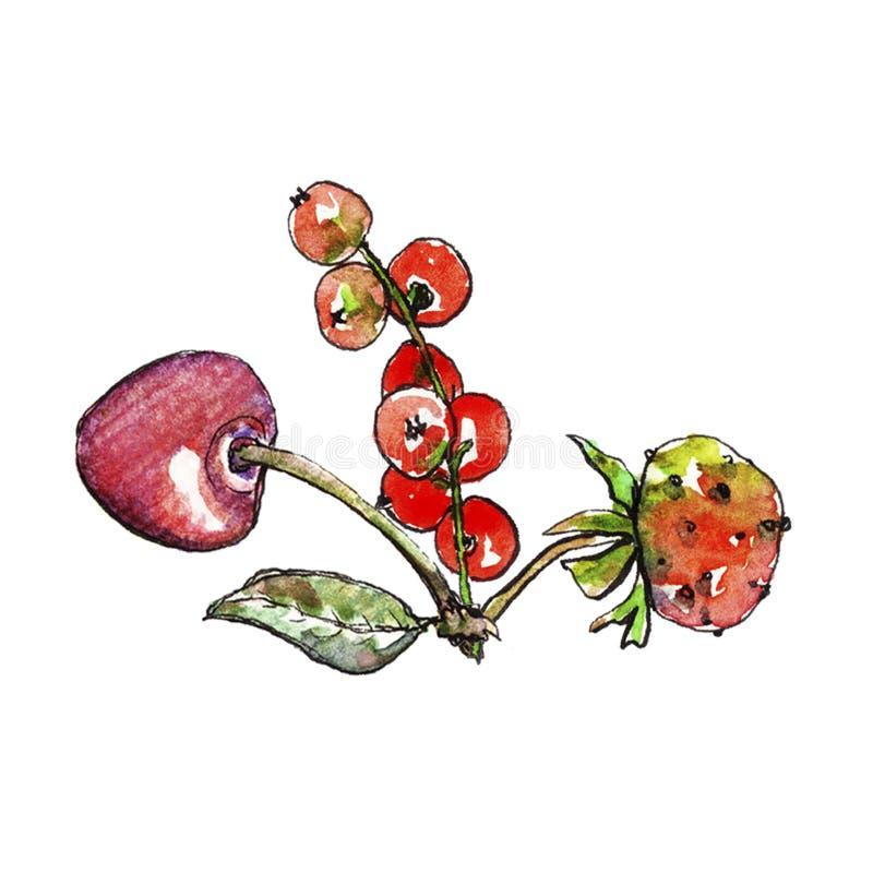 Vattenfärgvinbär, körsbär och jordgubbe vektor illustrationer