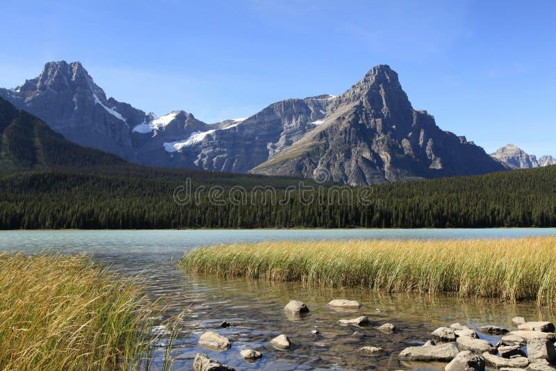 Vattenfågel sjö och berg i nedgången arkivbild