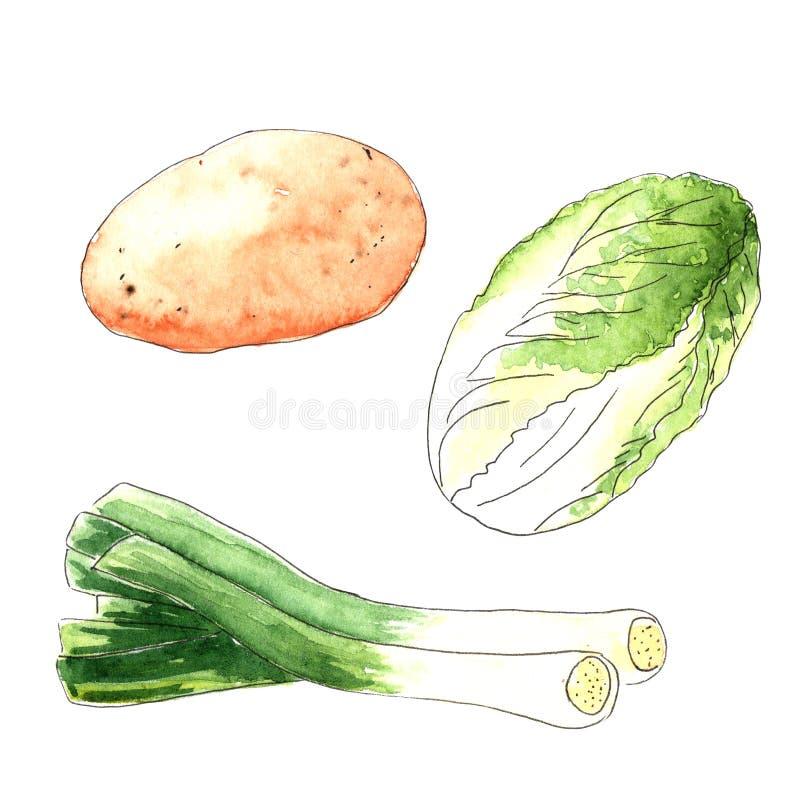 Vattenf?rggr?nsaker p? vit bakgrund Skissa av grönsallat, lökar och potatisar arkivbilder
