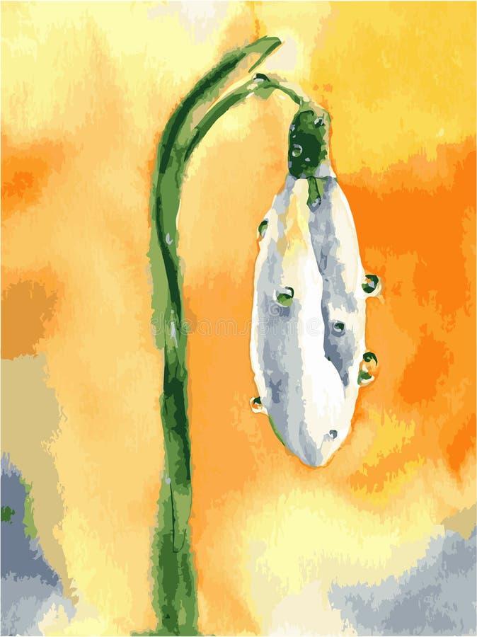 Vattenf?rgsn?droppeblommor V?rvektorbild med den vita blomman vektor illustrationer