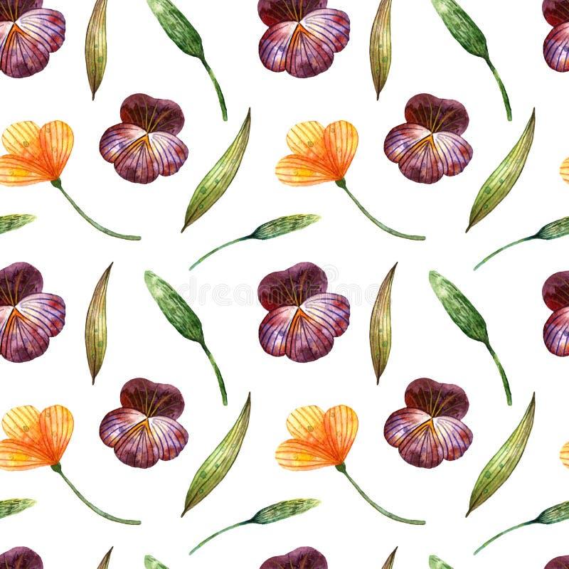 Vattenf?rgvildblommor Försiktig sömlös modell med pansies, sax och spikelets royaltyfri illustrationer