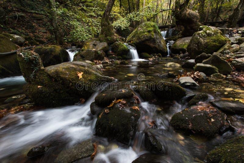Vattenfall över mossiga stenblock i skog fotografering för bildbyråer