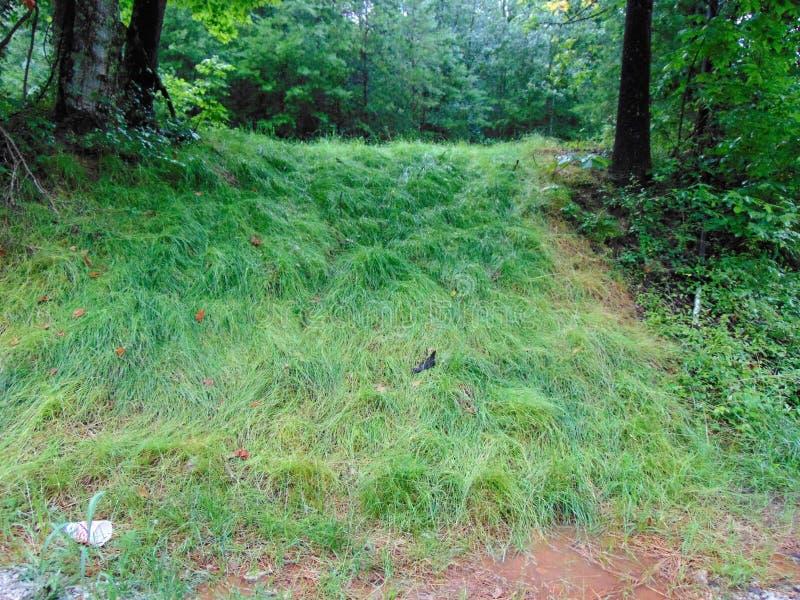 Vattenfall av gräs arkivfoton