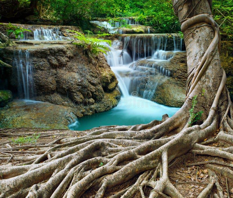 Vattenfall för Banyanträd och kalksteni djup skog för renhet använder n arkivbilder
