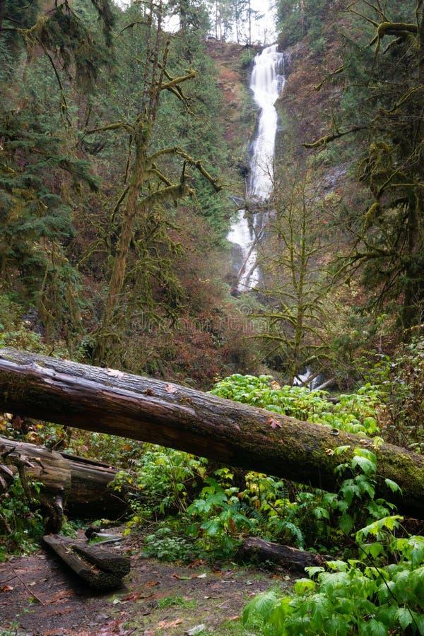 Vattenfall för trän för regnForest Trail Wet Gravel Lush gräsplan arkivfoton