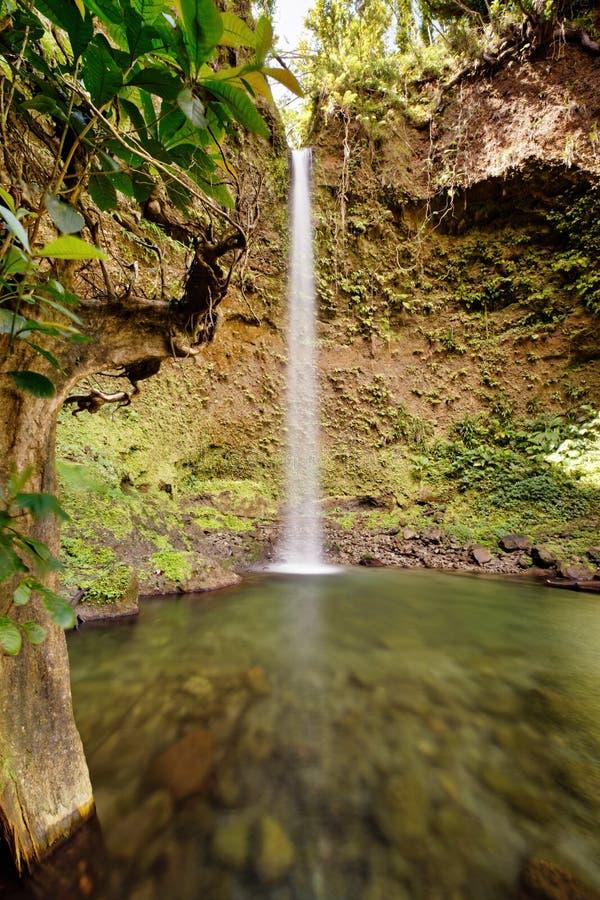 Vattenfall i Dominica royaltyfri bild