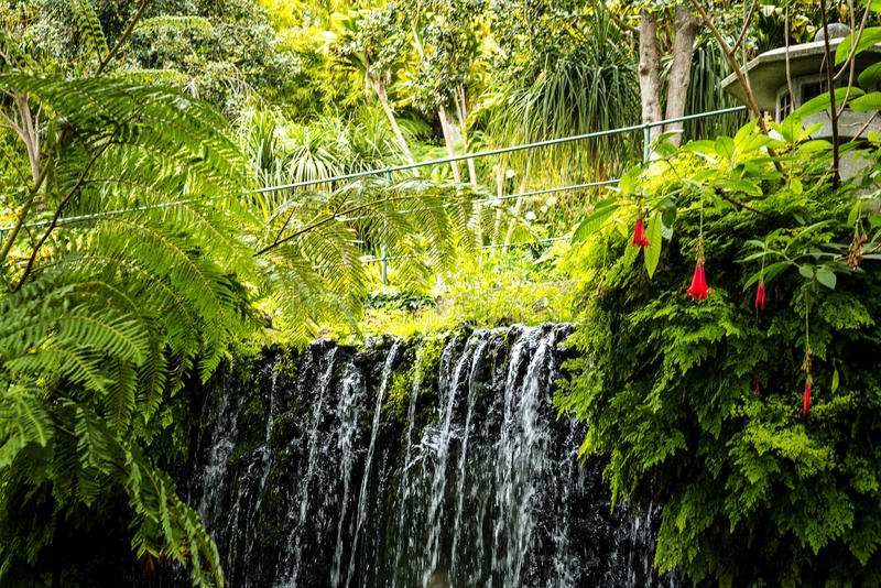 Vattenfall i en härlig trädgård på Monte ovanför den Funchal madeiran royaltyfri fotografi