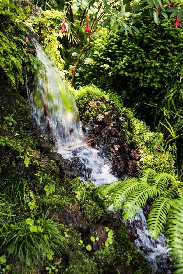 Vattenfall i en härlig trädgård på Monte ovanför den Funchal madeiran arkivbilder