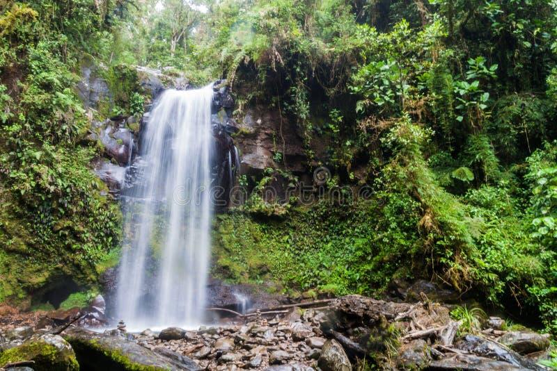 Vattenfall i en molnskog nära Boquete, Panama Tillgängligt av Lost vattenfall som fotvandrar trai royaltyfri bild