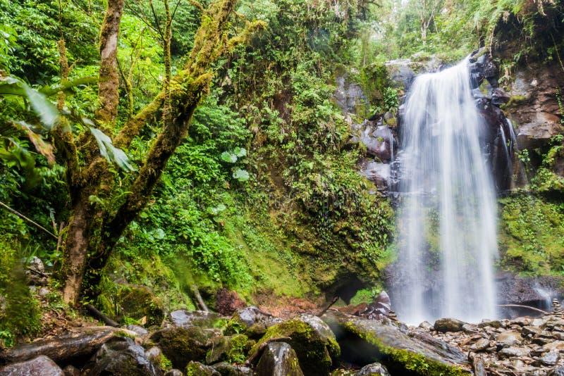 Vattenfall i en molnskog nära Boquete, Panama Tillgängligt av Lost vattenfall som fotvandrar trai royaltyfri foto