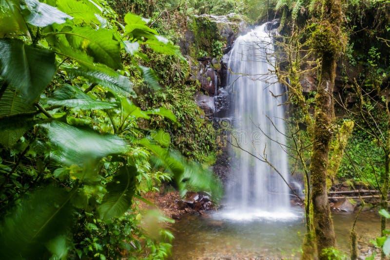 Vattenfall i en molnskog nära Boquete, Panama Tillgängligt av Lost vattenfall som fotvandrar trai royaltyfria foton