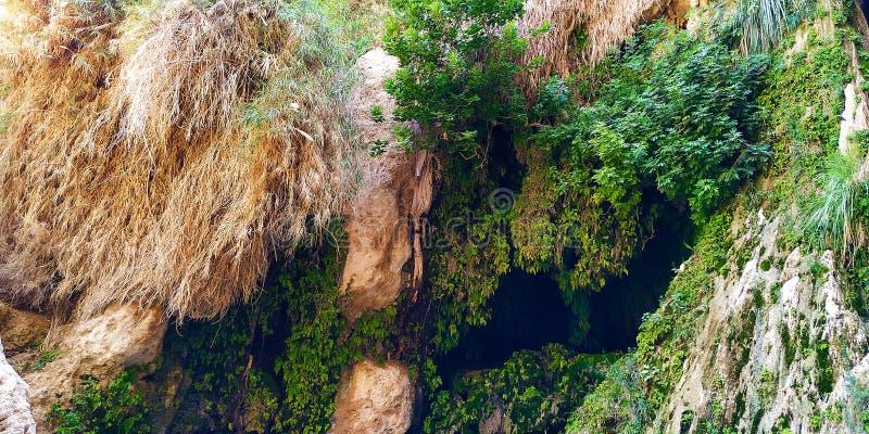 Vattenfall i en skog Ein Gedi fotografering för bildbyråer