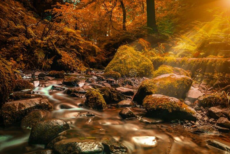 Vattenfall i höst Skogström som kör över mossy rocks Fil royaltyfri foto