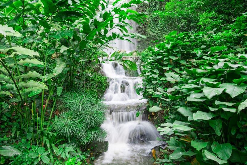 Vattenfall i regnskogen arkivfoto
