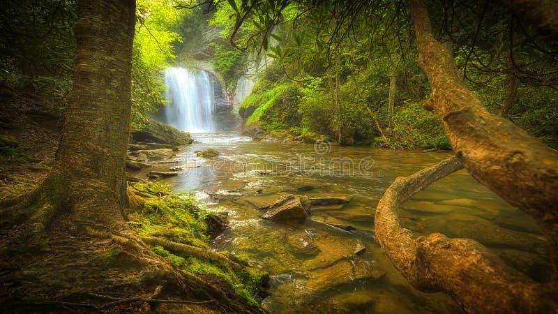 Vattenfall i trän av North Carolina royaltyfria foton