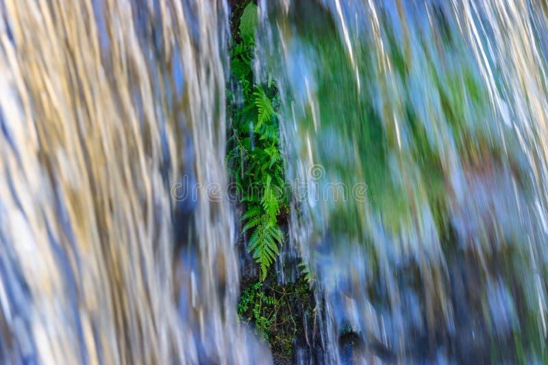 Vattenfall med ferns fotografering för bildbyråer