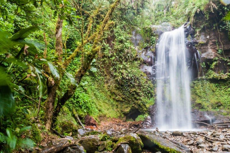 Vattenfall nära Boquete, Panama Tillgängligt av Lost vattenfall som fotvandrar trai fotografering för bildbyråer