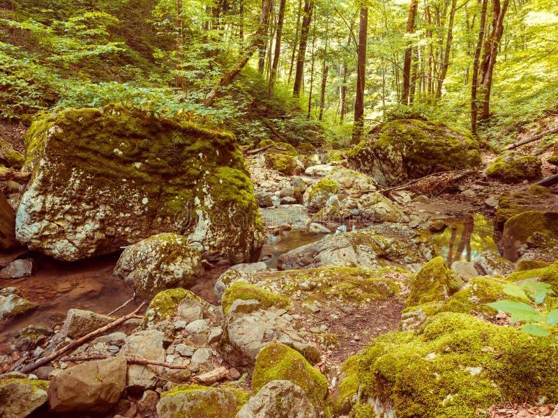 Vattenfall som flödar till och med en grön skog i det Krasnodar territoriet royaltyfri foto
