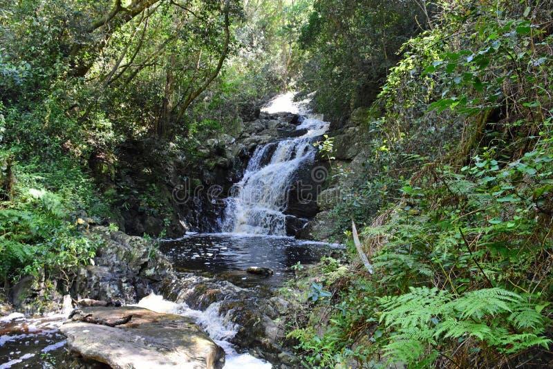 Vattenfall Tsitsikamma nationalpark, trädgårds- rutt, nr Knysna, Sydafrika arkivbild