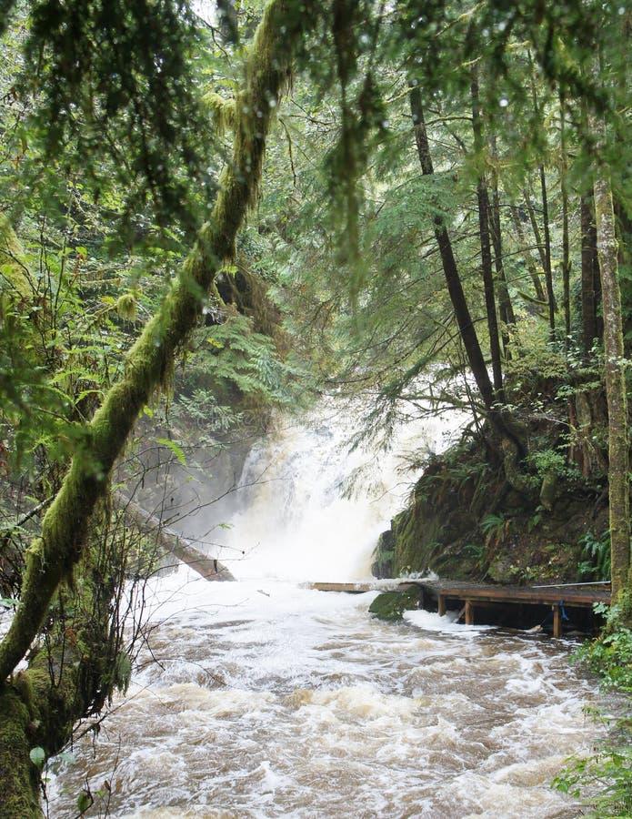 Vattenfallet i den Ucluelet regnskogen applåderar in i en rasa flod royaltyfri fotografi