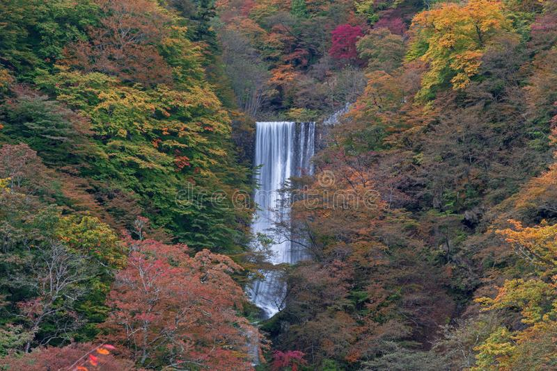 Vattenfallet i skog med träd som ändrar sidor, färgar i röd guling och gräsplan i höst arkivfoto