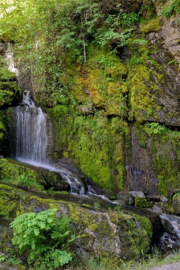 Vattenfallet och grönt mossigt vaggar royaltyfri fotografi