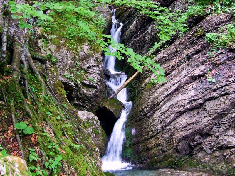 vattenfallet vatten, naturen, floden, strömmen, kaskaden, skogen, landskapet, gräsplan, vaggar, berget, stenen, liten vik, nedgån royaltyfri fotografi