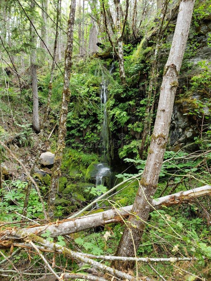 vattenfallpumabehållare Oregon royaltyfri bild